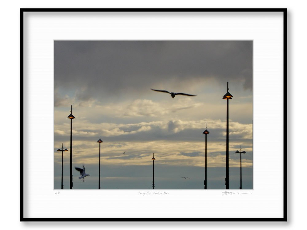 Seagulls, Venice Pier