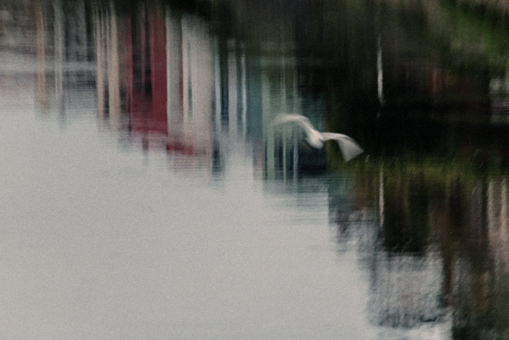 Snowy Egret over Ballona Lagoon